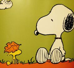 42fa9c621b78fd11a7cd227fa22c4c1a--snoopy-love-snoopy-and-woodstock