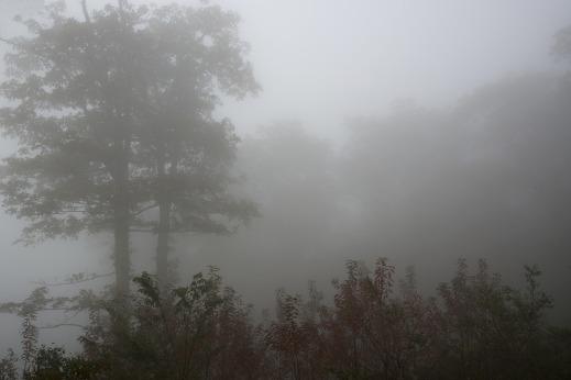 foggy-1754396_960_720