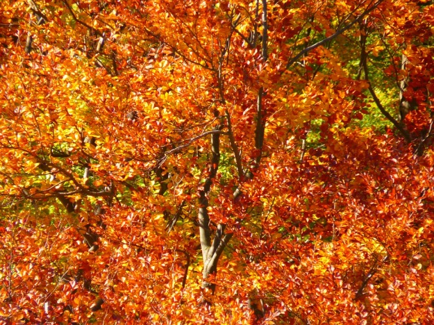 forest-63279_960_720