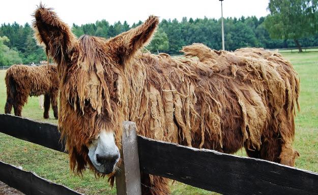 donkey-3407474_1920